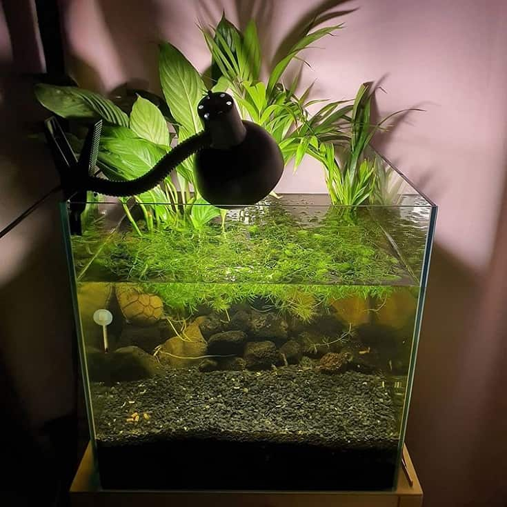 Acuario de tortugas plantado
