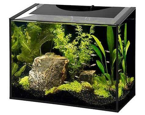 Kit de acuario LED sin marco Aqueon Ascent, 10 galones